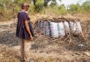 Taita Taveta County Charcoal Producers Play Hide and Seek With Government